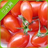 ピンクショップ150本フルーツチェリートマト種子、オリジナルパッケージミニトマト種子フォーシーズンDIY HOME PLANT盆栽フルーツシーズ