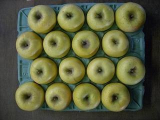 訳あり 【農園より産地直送】 長野県産 シナノゴールド りんご ご家庭用わけあり品 約9kg 24〜40個入