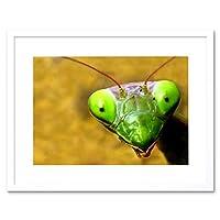 Praying Mantis Eyes Macro Close Up Green Picture Framed Wall Art Print 目マクロ閉じる緑画像壁