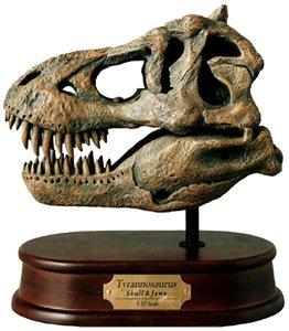 ティラノサウルス スカルモデル