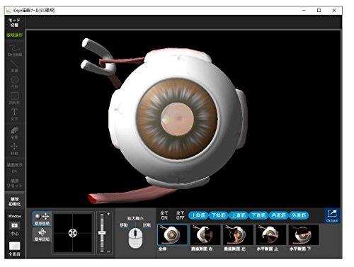 眼科 インフォームドコンセント 支援システム iCeye 211 描画ツール ( CG シェーマ [ 目のしくみ 検査 白内障 緑内障 加齢黄斑変性 糖尿病網膜症 ] 3D 眼球模型 ) USBメモリ版