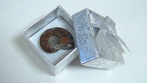 マダガスカル 産 アンモナイト シルバー ボックス