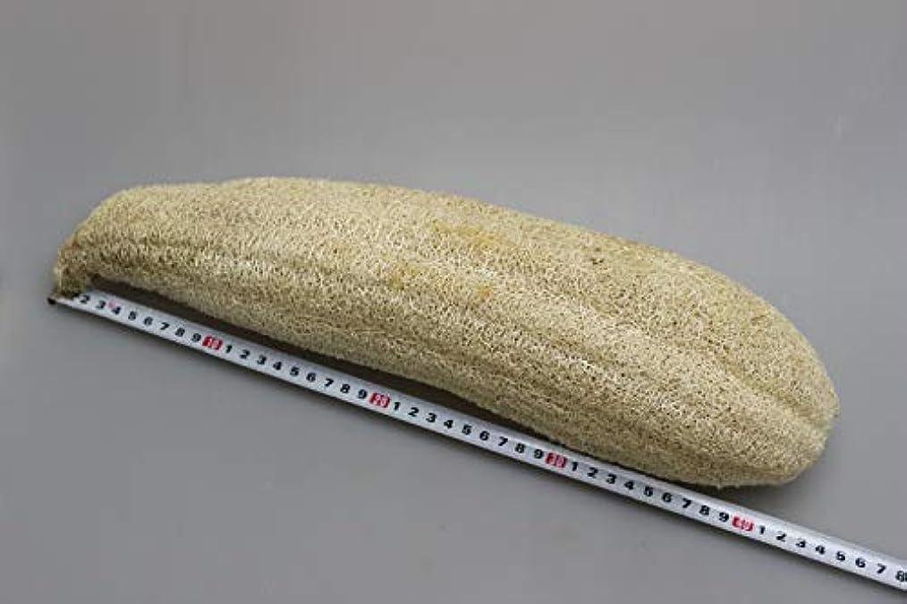 スライム囲む検出器宮崎県産ヘチマ(乾燥) (L)