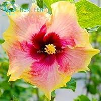 種子パッケージ: プラム:ハーディの100pcs種子、ミックスカラー、DIYホームガーデンは、鉢植えや庭の花植物