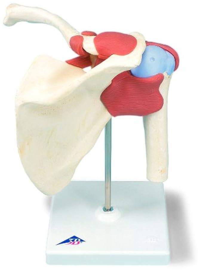 すべき謎めいた便利さ肩関節,機能デラックスモデル