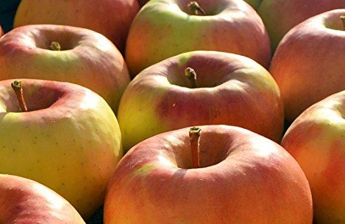 長野県産 生産農家直送りんご 「名月」 中級ランク ご贈答&自家用向き 6〜12玉 約3kg入り/箱