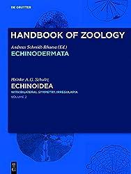 Echinoidea: With Pentameral Symmetry