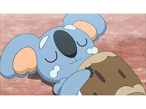 寝る子は強い、ネッコアラの秘密!
