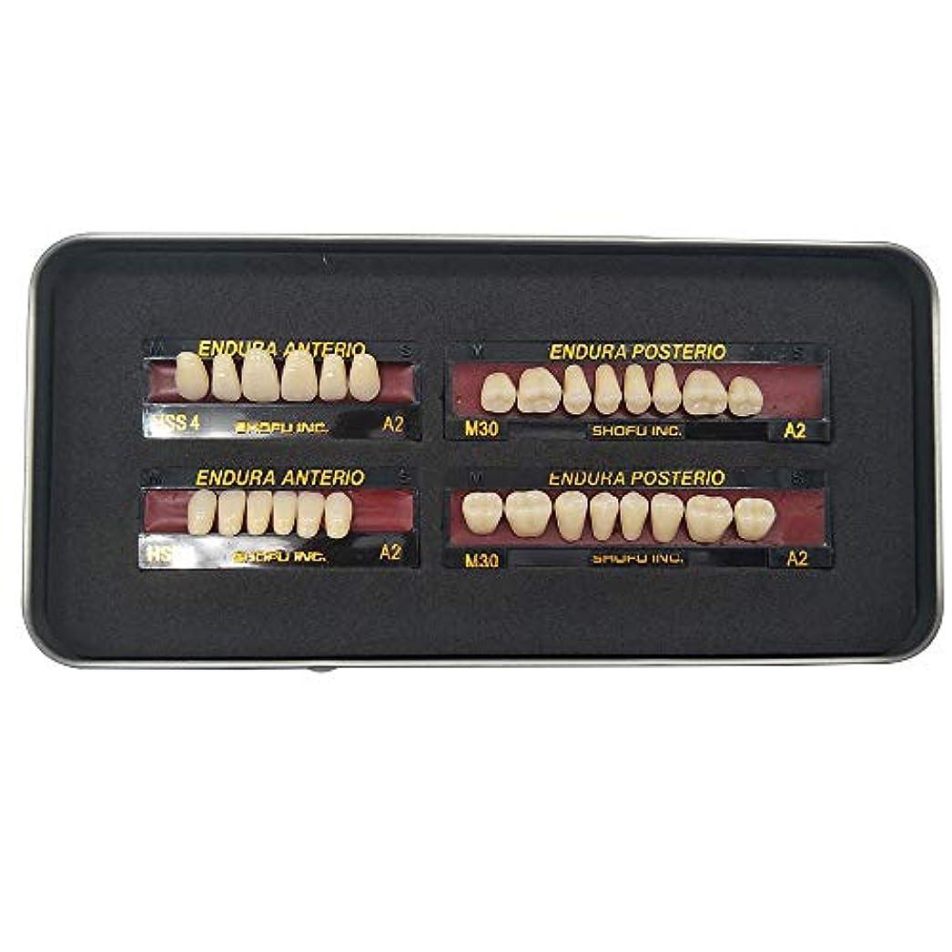 コーススカーフフィドルSHINAHUATONG 1ボックス/セット歯科用 義歯 サイズM30 カラーA2 28枚/セット