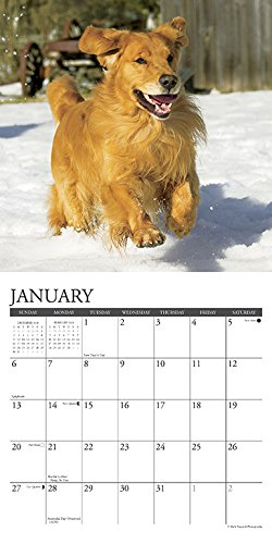 『Just Goldens 2019 Calendar』の2枚目の画像