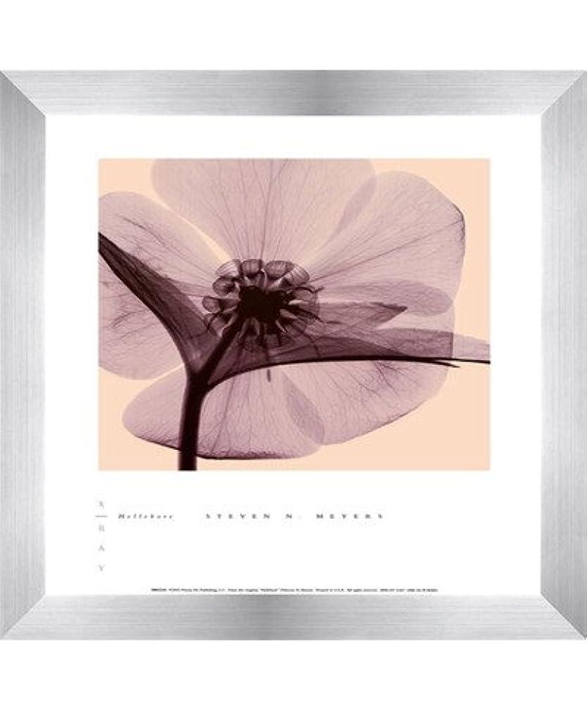 羨望セッショングラフィックHellebore by Steven N。MEYERS – 10 x 12インチ – アートプリントポスター LE_100640-F9935-10x12