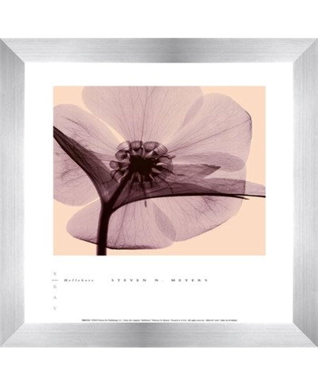 オーラル本質的に矢じりHellebore by Steven N。MEYERS – 10 x 12インチ – アートプリントポスター LE_100640-F9935-10x12