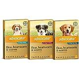 Advocate Dog 25-50kg Drops