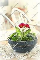 9:ミニプリムローズプリムラの花の種四季盆栽の花鉢植えの種-120個