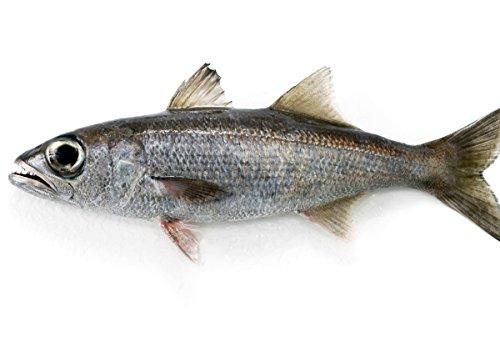 築地魚群 天然 クロムツ1尾 国産 1-1.5kg前後サイズ