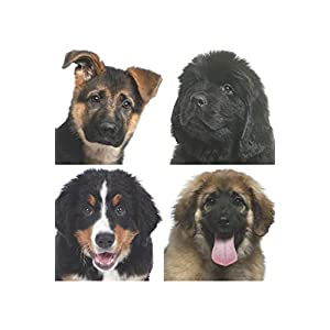 The HMB Doggie Series: The Complete Collection of BOONE, BENNETT, TANGO and CASH