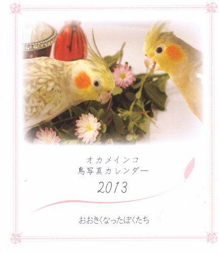 オカメインコ鳥写真カレンダー2013 おおきくなったぼくたち
