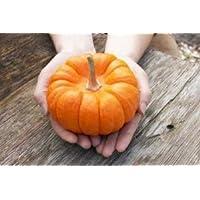 ジャックミニかぼちゃ 2粒