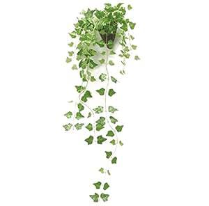 壁に掛けれる インテリアグリーン 光触媒 加工 アイビー 壁掛け