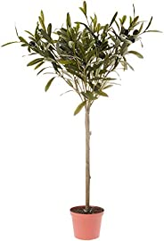 Décor Villa DBOT65312 Artificial Olive Topiary