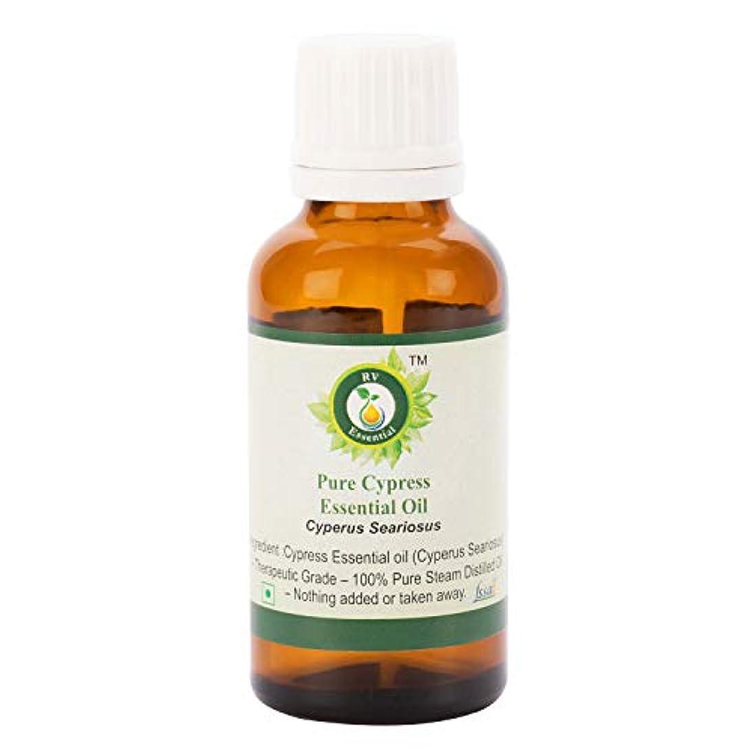 相対サイズ視聴者極地ピュアサイプレスエッセンシャルオイル100ml (3.38oz)- Cyperus Seariosus (100%純粋&天然スチームDistilled) Pure Cypress Essential Oil