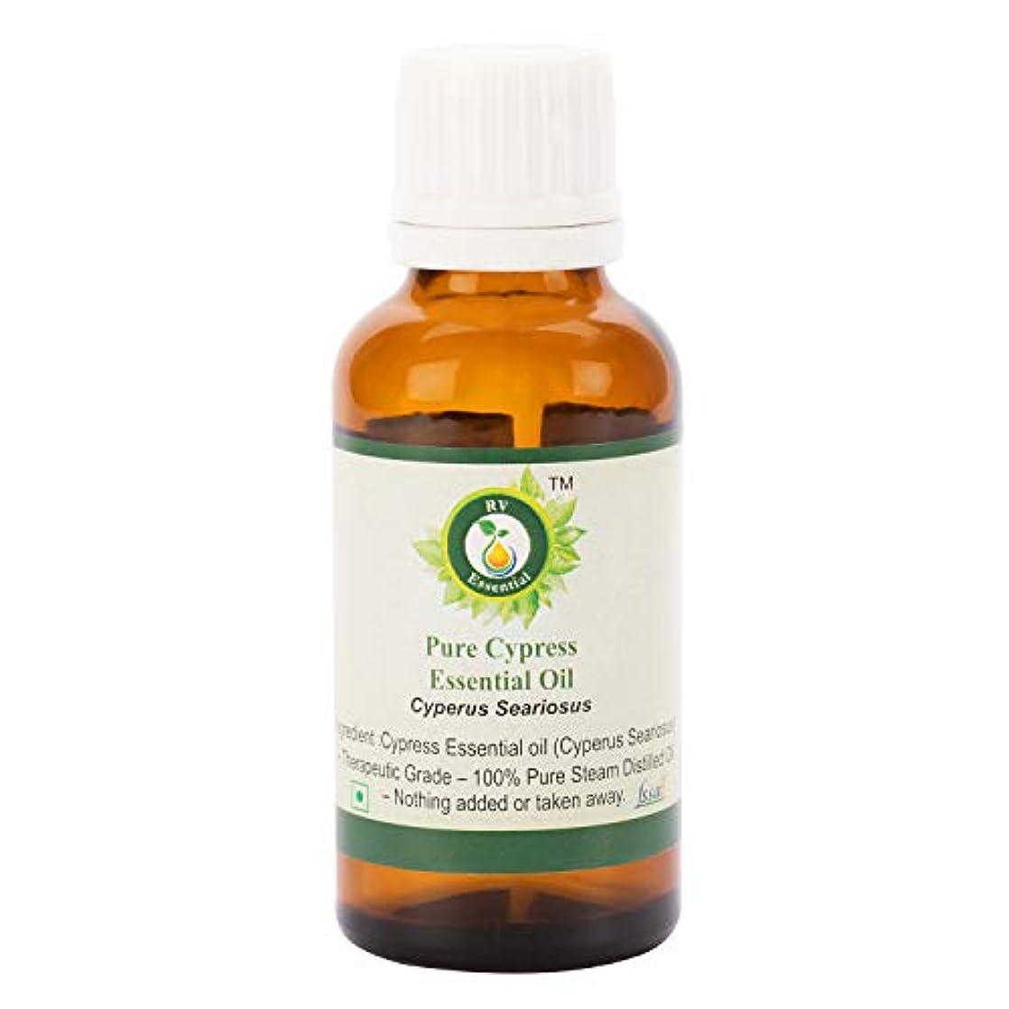 縮れた生産的時代ピュアサイプレスエッセンシャルオイル100ml (3.38oz)- Cyperus Seariosus (100%純粋&天然スチームDistilled) Pure Cypress Essential Oil