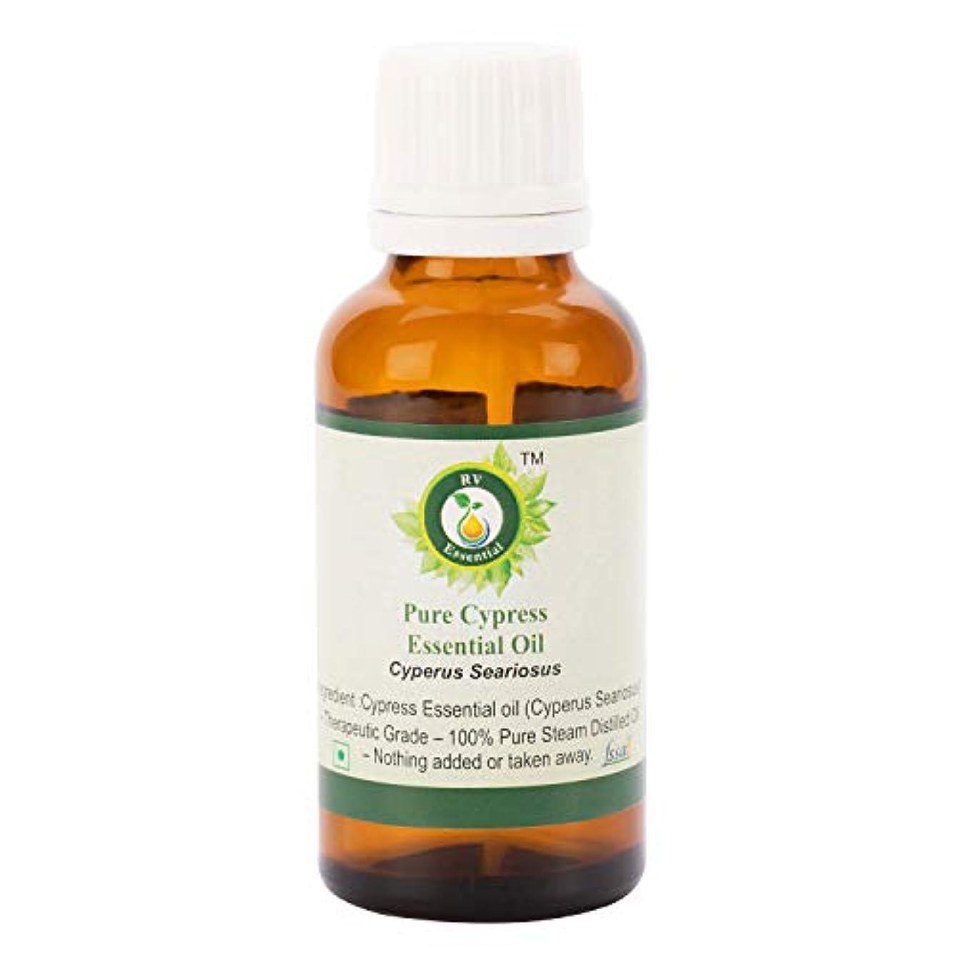 スタジアム枯渇天のピュアサイプレスエッセンシャルオイル100ml (3.38oz)- Cyperus Seariosus (100%純粋&天然スチームDistilled) Pure Cypress Essential Oil