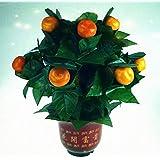 10ブルーミングオレンジ - リモートコントロール / 10 Blooming Oranges - Remote Control -- ステージマジック / Stage Magic /マジックトリック/魔法; 奇術; 魔力