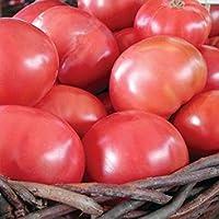 ndyトマト従来・有機の1/8 M有機種