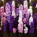 国華園 花たね 矮性デルフィニウム混合 1袋(約100粒)【※発送が国華園からの場合のみ正規品です】