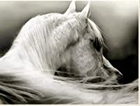 Xiyuyuan Diyの白い馬の頭のリビングルームの装飾絵画クロスステッチ5Dフルダイヤモンド絵画工芸