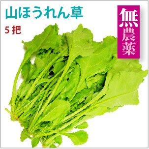 【山ほうれん草 5把】島根県産無農薬栽培 【送料込】