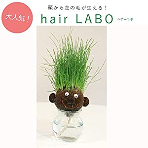 hair LABO(ヘアーラボ)底面給水タイプ:丸顔[頭から芝が生える!] ノーブランド品
