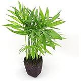 壁掛け観葉植物ミドリエ用交換苗「テーブルヤシ」 ~サントリー・トヨタの新提案~ 絵を飾るようにみどりを飾る