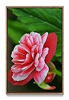 木製の枠 ズックの印刷する絵画 家の壁の装飾画 キャンバス ポスター (35x50cm ブラウンカラーフレーム) ベゴニア赤い白い花びら