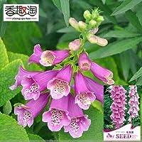 1オリジナルパック50種子共通ジギタリス、庭の花の種