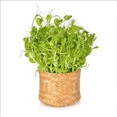 有機 青 えんどう 豆/豆苗/有機 種子 固定種/グリーンフィールド/スプラウト [小袋]