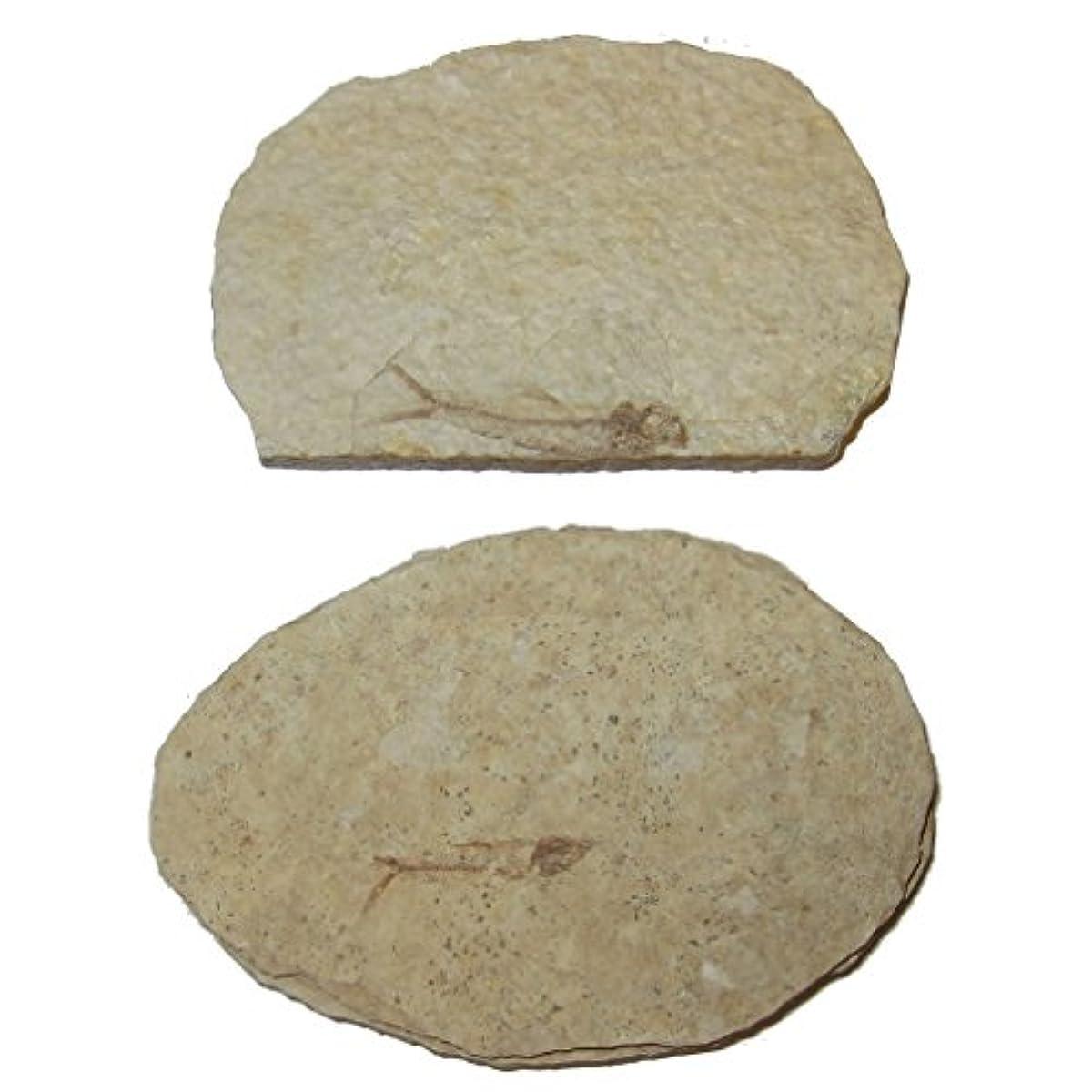 ハンマー開示する謎化石スライス51 Fresh Water Herring魚スケルトンAquaticボーンサンプル50万年3