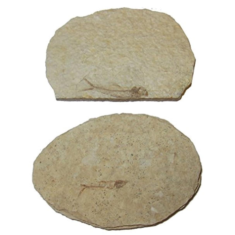 変動する胃呼びかける化石スライス51 Fresh Water Herring魚スケルトンAquaticボーンサンプル50万年3