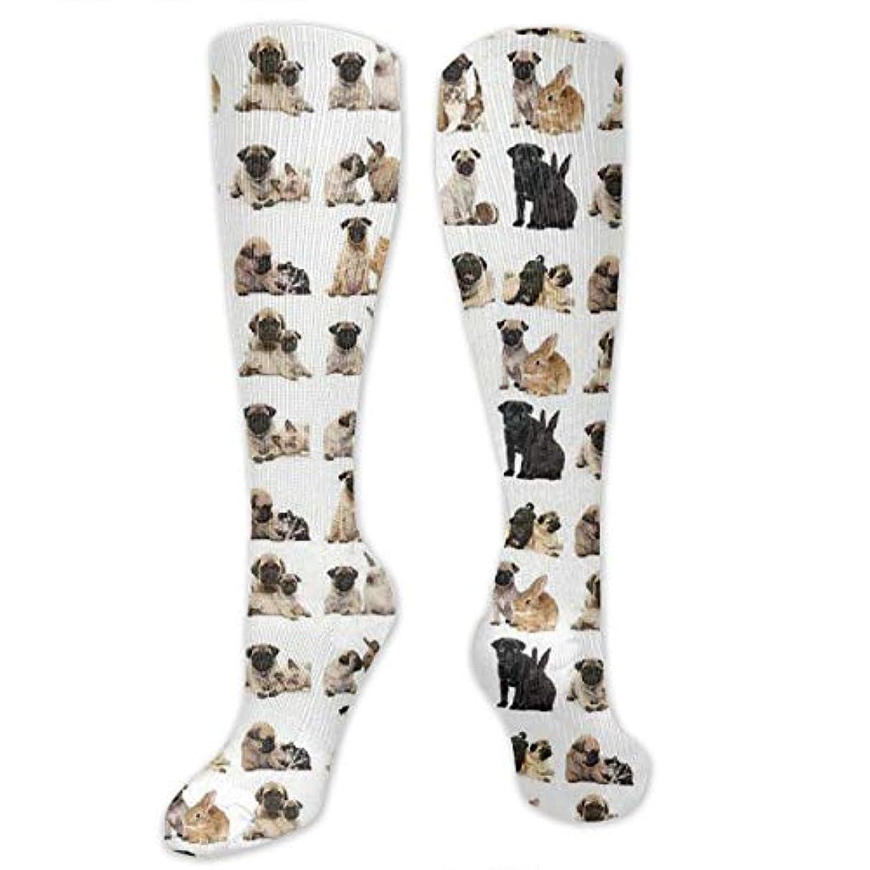 毒液支援どうしたの靴下,ストッキング,野生のジョーカー,実際,秋の本質,冬必須,サマーウェア&RBXAA Pug Poster Socks Women's Winter Cotton Long Tube Socks Cotton Solid...