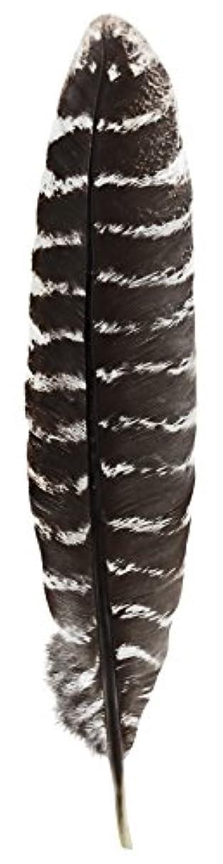 妻からに変化する領事館Grade A Barred Turkey Smudging Feather (no stains, cuts, pieces missing) by Incense Garden