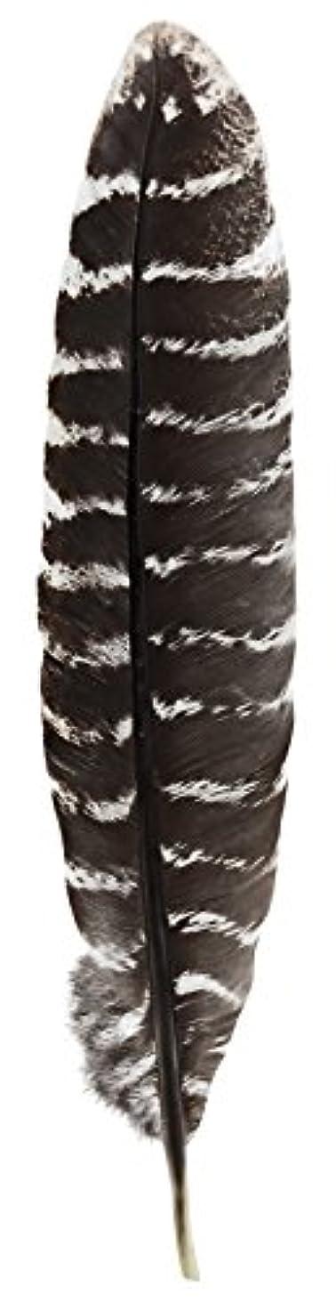 曲メアリアンジョーンズ相互接続Grade A Barred Turkey Smudging Feather (no stains, cuts, pieces missing) by Incense Garden