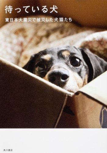 待っている犬  東日本大震災で被災した犬猫たち