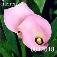100個カーラの花レア盆栽カーラリリーフラワー(未カーラ)、ホームガーデンのための自然な成長:17