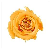 そらプリ プチシャーロット フルーティーオレンジ 1輪 oh-02591-351