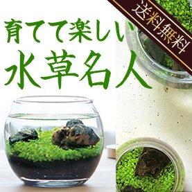 『水草名人:癒しの達人』種から育てる水草、水槽セット