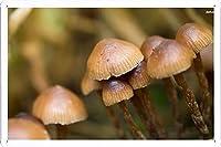 #27798キノコのティンサイン 金属看板 ポスター / Tin Sign Metal Poster of #27798 Mushrooms