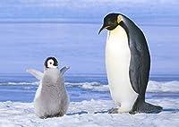 絵画風 壁紙ポスター (はがせるシール式) ペンギンの親子 コウテイペンギン 南極大陸 鳥 キャラクロ BPNG-001A2 (A2版 594mm×420mm) 建築用壁紙+耐候性塗料