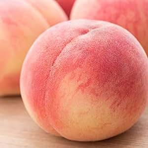 献上桃 ご家庭用 訳あり 3kg(8〜14玉) 献上桃の里福島県桑折町