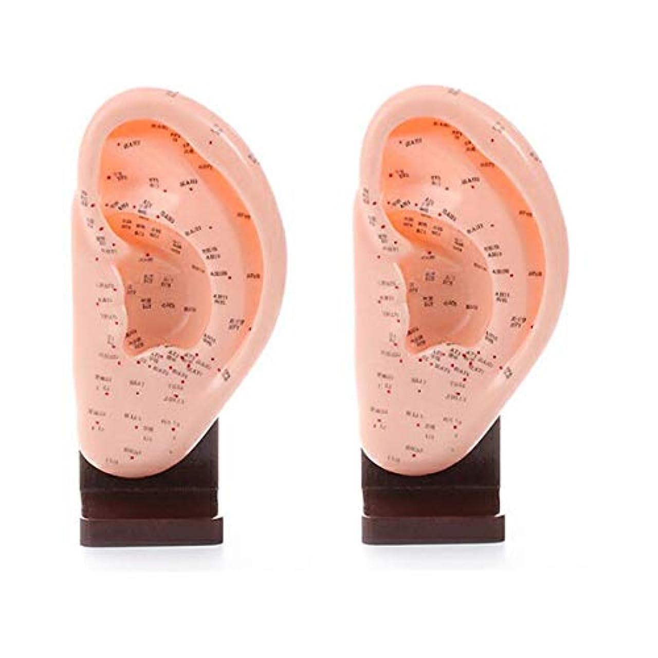 エレガント発見する小麦粉スタンド付き耳模型 幅120×高さ250×奥行65mm (2個セット) [ 練習用マネキン 練習用 耳経穴模型 耳ツボ 耳つぼ 人体 模型 耳 イヤー マネキン 整体院 鍼灸院 ]